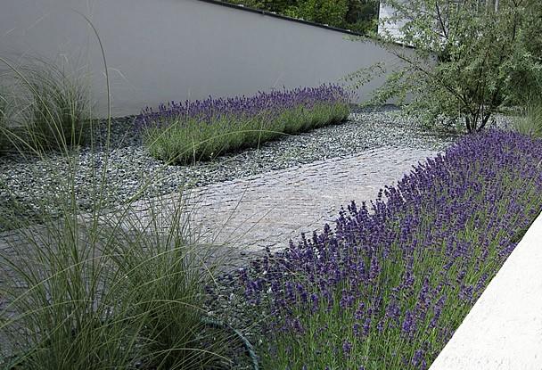 Moderner Garten Mit Gräsern Beeindruckend On Modern überall Unglaublich Moderne Gartengestaltung Design Plan 7