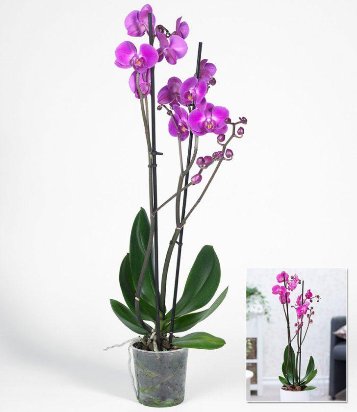 Gestaltungsideen Durch Orchiden Charmant On Ideen Für Uncategorized Schönes Die Einrichtung Und Ist 8