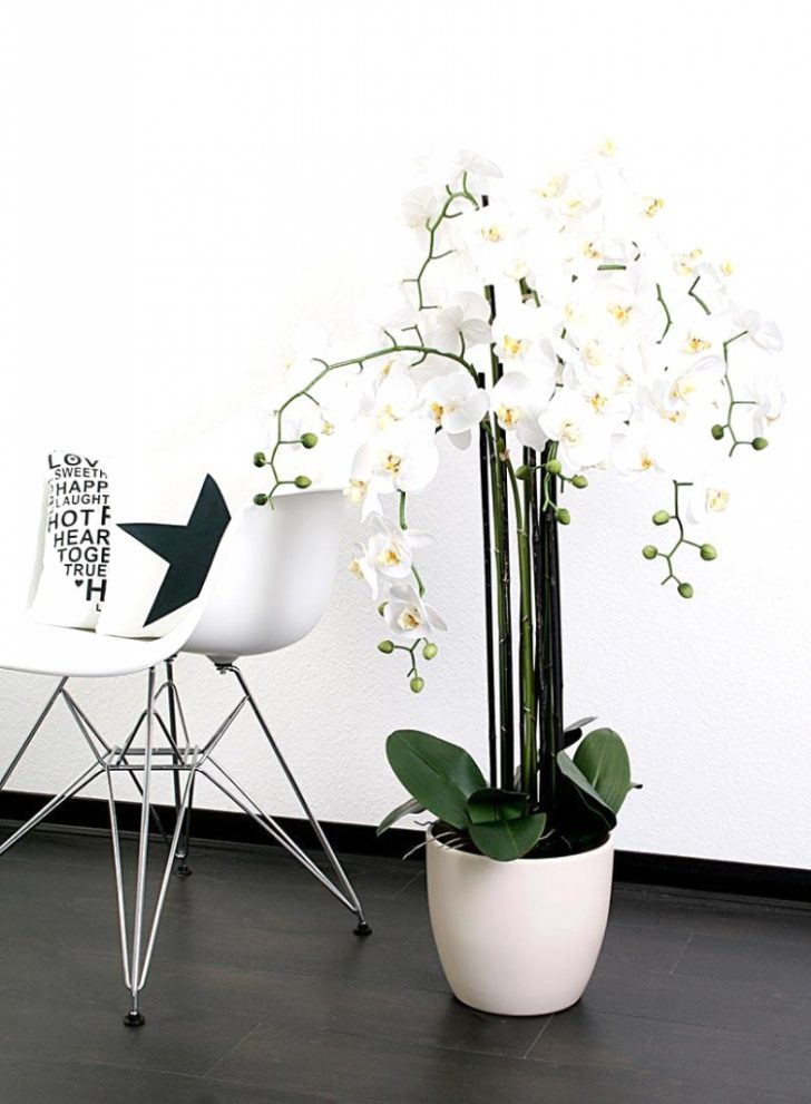 Gestaltungsideen Durch Orchiden