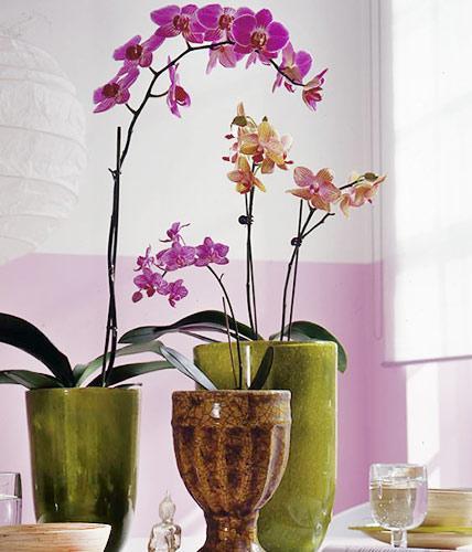 Gestaltungsideen Durch Orchiden Herrlich On Ideen Beabsichtigt Orchideen Schätze Aus Dem Regenwald LIVING AT HOME 5