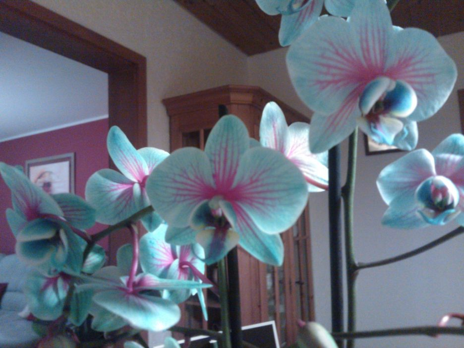 Gestaltungsideen Durch Orchiden Interessant On Ideen Beabsichtigt System Uncategorized Kühles Die 7