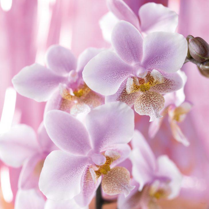 Gestaltungsideen Durch Orchiden Kreativ On Ideen überall Gestaltung Ausgezeichnet Auf 6
