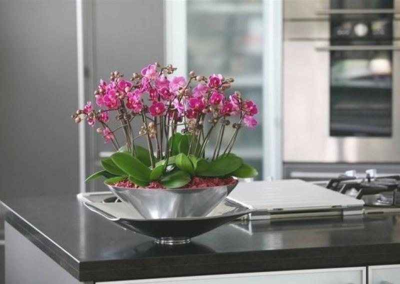 Gestaltungsideen Durch Orchiden Modern On Ideen überall Arkimco Com 4