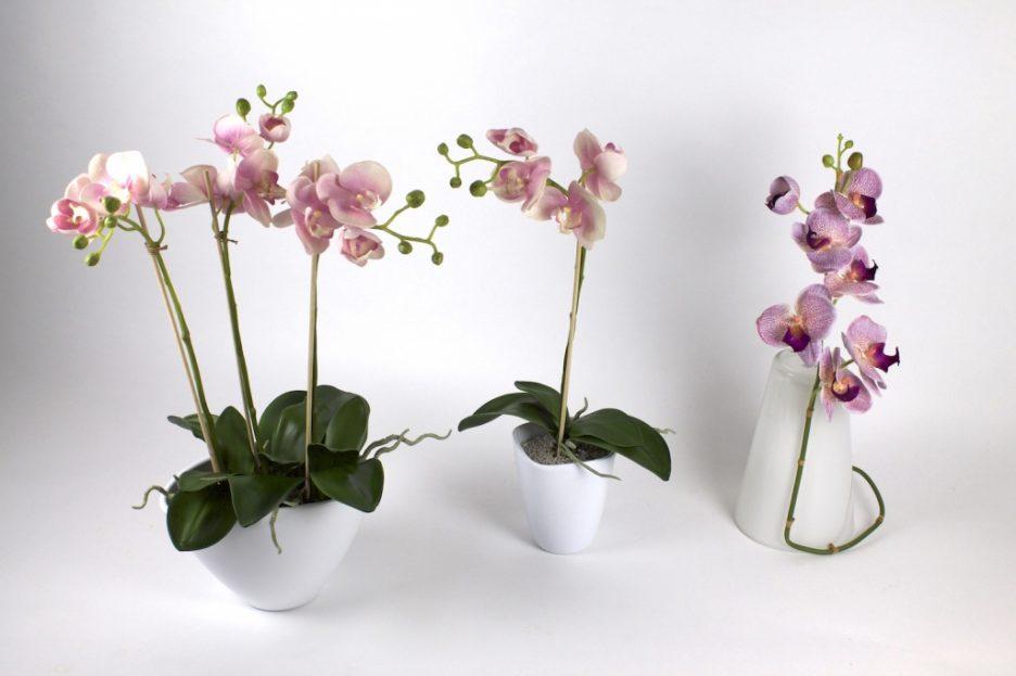 Gestaltungsideen Durch Orchiden Perfekt On Ideen Beabsichtigt Uncategorized Tolles Die Einrichtung Und Ist Einfach 1