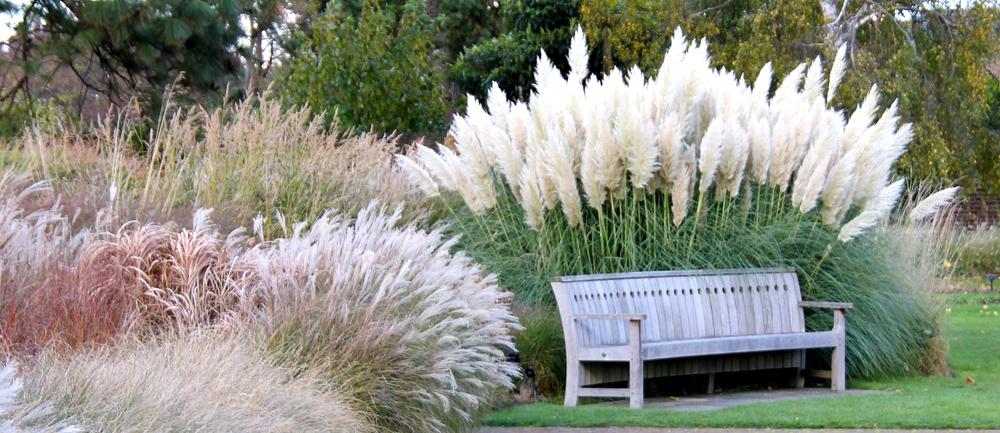 Moderne Gartengestaltung Mit Gräsern Unglaublich On Modern In Bezug Auf Pflanzen Für Gärten 3