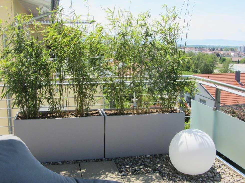 Bambus Als Sichtschutz Charmant On Andere Mit Für Terasse Und Balkon 5