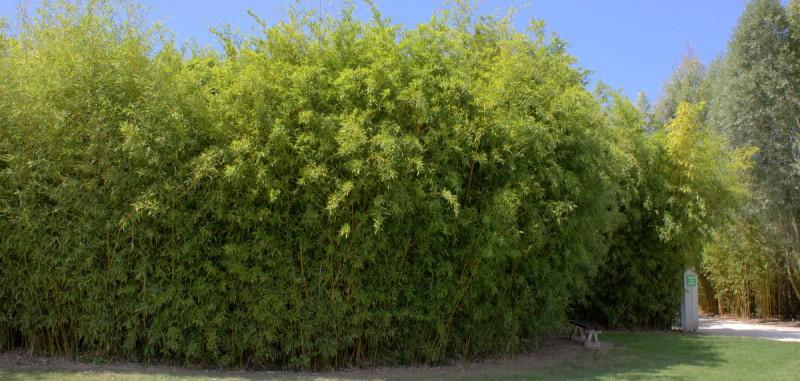 Bambus Als Sichtschutz Interessant On Andere Mit Auf Terrasse Balkon Bambushecken De 9