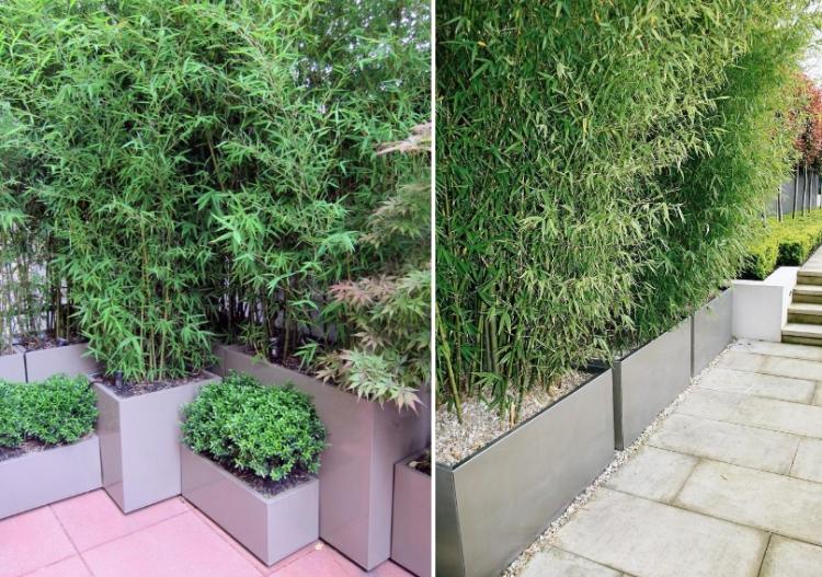 Bambus Als Sichtschutz Schön On Andere Mit Im Kübel Und Deko Auf Der Terrasse 2