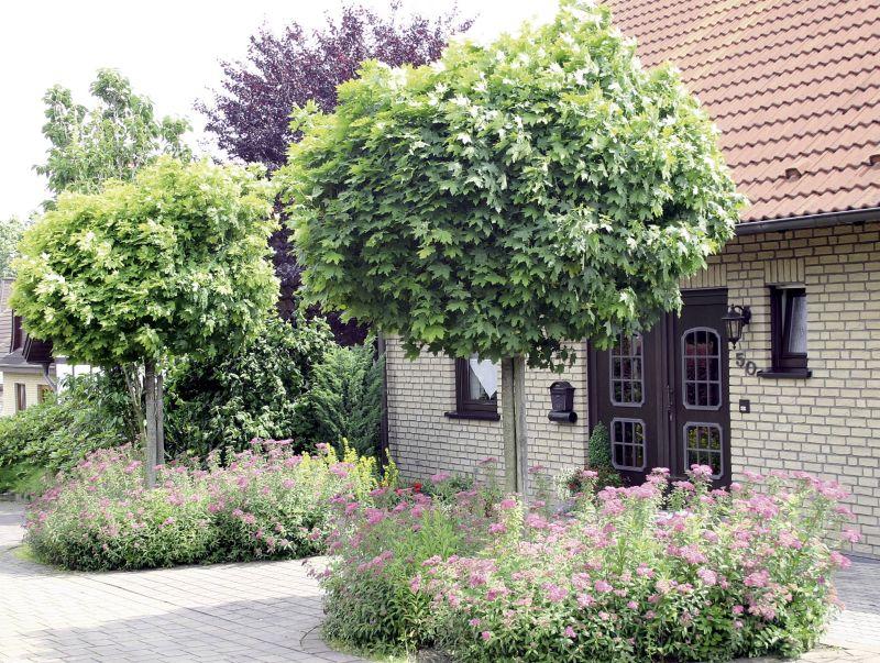 Offener Vorgarten Einfach On Andere In Bezug Auf Ein Schöner Planungswelten 6