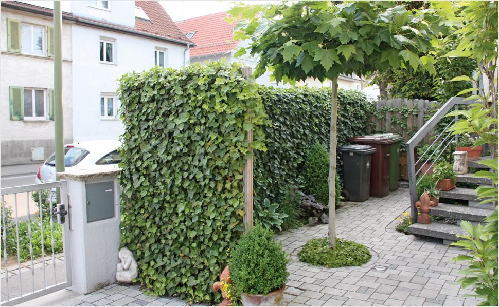 Sichtschutz Garten Imposing On Andere Auf Für Und Terrasse HORNBACH Schweiz 6